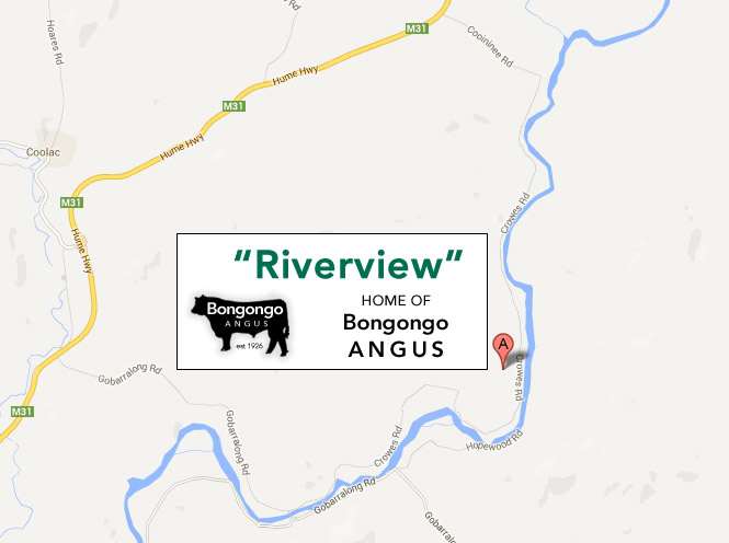 google-map-bongongo-angus-with-logo
