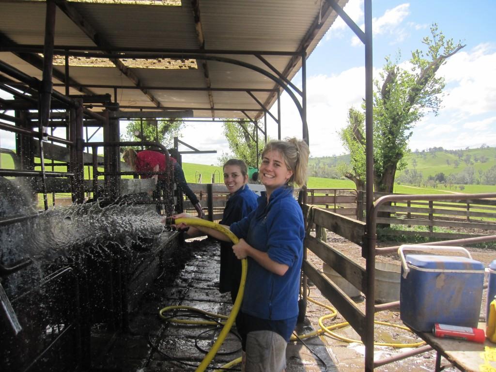 the girl's washing bulls for Sprring sale 2011