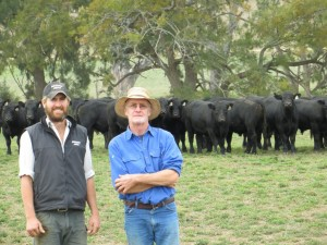 Tom and Bill with Autumn Sale Bulls 2013 at Riverview