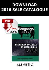2016 Autumn Bongongo Catalogue - Cover Only