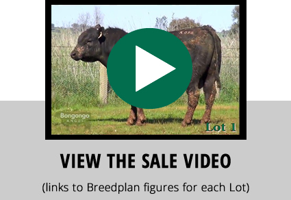 View 2016 Sale Bulls